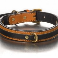 tucker-leather-collar-black-on-gold